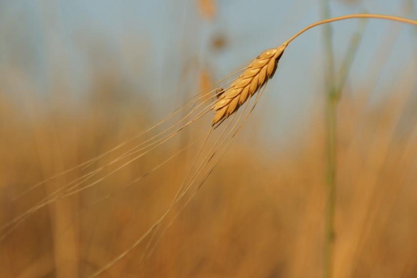 Dobeles Dzirnavnieks grain mill plans to invest EUR 30