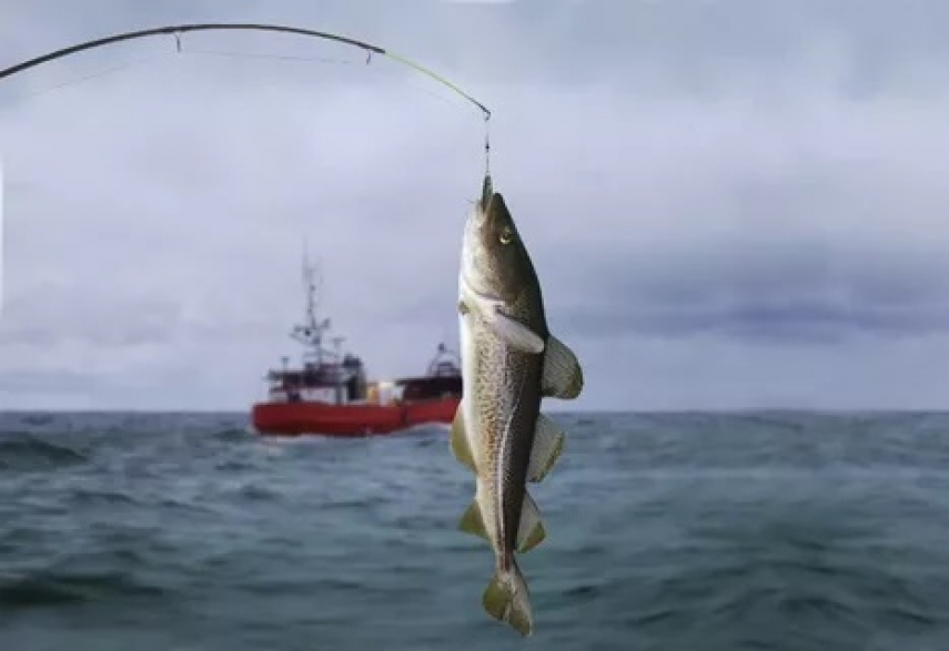 EU bans cod fishing in Baltic Sea