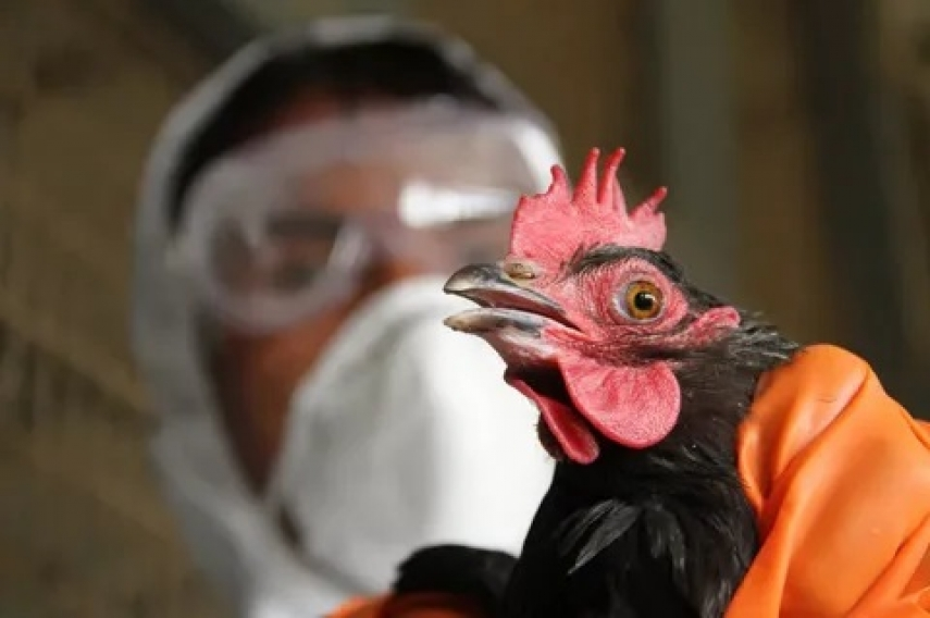 No bird flu infected poultry from Poland reaches Lithuanian market - veterinary body