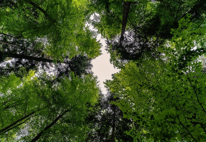 Latvia's forest sector has untapped potential in the area bioeconomy - Vejonis