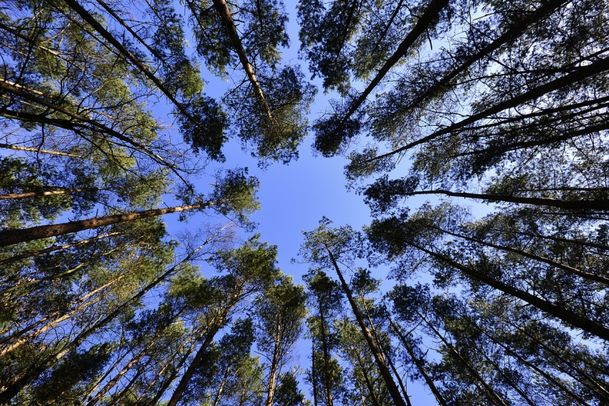 EU adopts forest strategy to protect old forests, plant 3 billion new trees